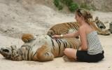 tiger-templae