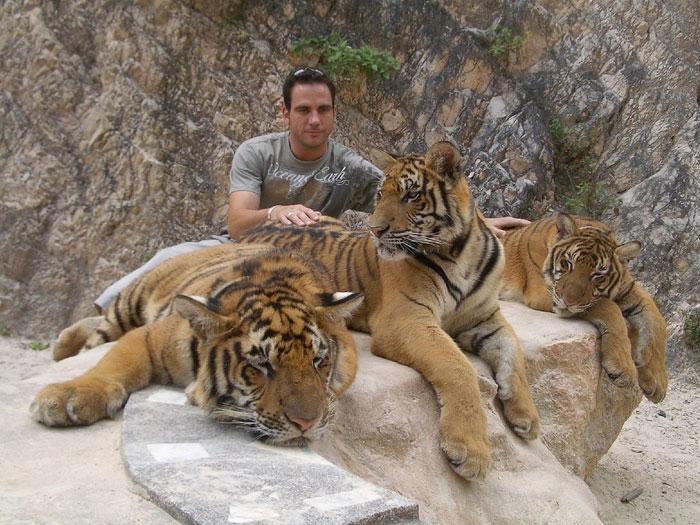 Bangkok Day Tours Tiger Temple